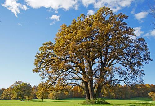 Outstanding tree