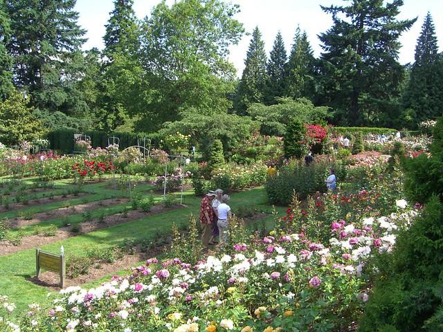 Portland International Rose Test Garden Flickr Photo Sharing