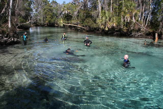 Manatee River Tours Belize Review Cruisecritic