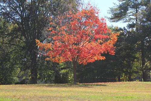 autumn providence fallfoliage rhodeisland rogerwilliamspark