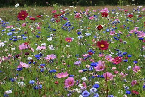 fleurs_juillet_2007_045
