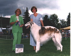 dog sports, animal sports, animal, silken windhound, dog, sighthound, saluki, sports, pet, mammal, irish wolfhound, conformation show, borzoi,
