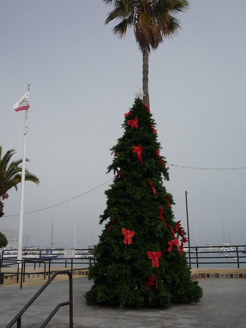 Catalina Island Christmas Weather