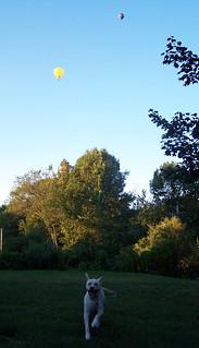 Balloons_ZeusRUN_907
