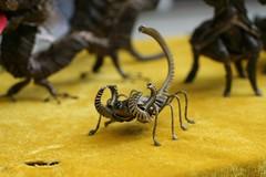 arthropod, animal, yellow, scorpion, invertebrate, insect, macro photography, fauna, close-up,