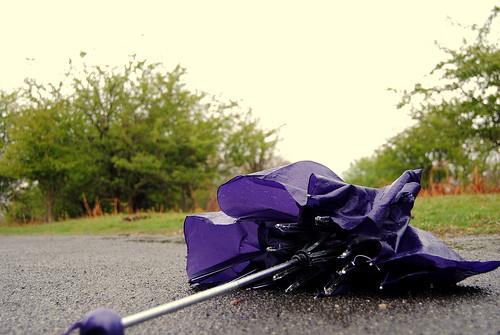 Payung Ungu Amela
