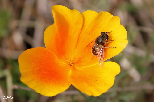 A bee enjoys the last of October's flowers by Stocker Images