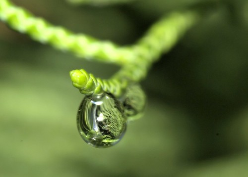 The Dewdrop
