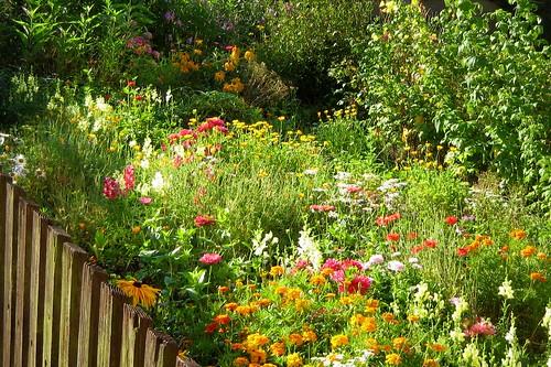 Neighbor's garden I