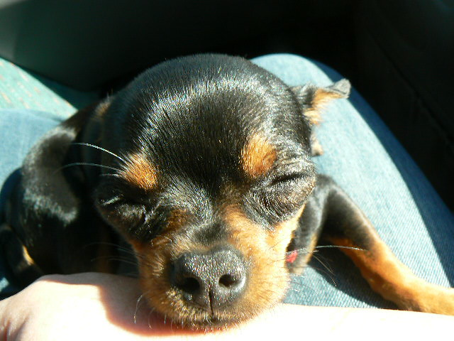 Coco Sleeping on the Summer Trip to MN