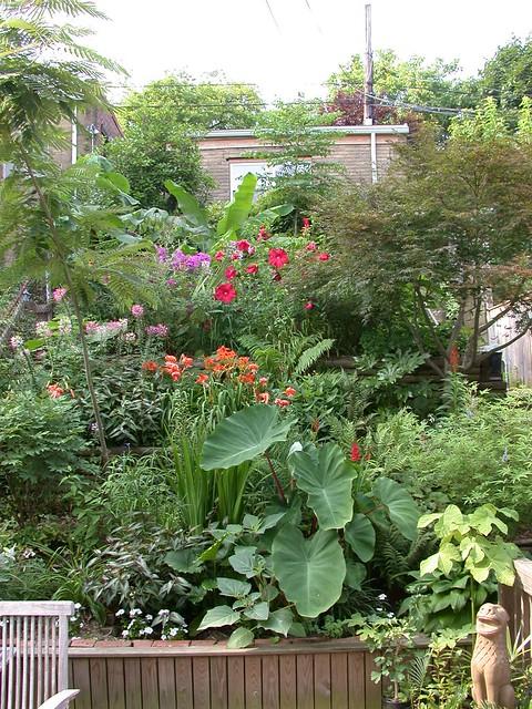 Back gardens, July