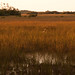 Small photo of Everglades - River of Grass