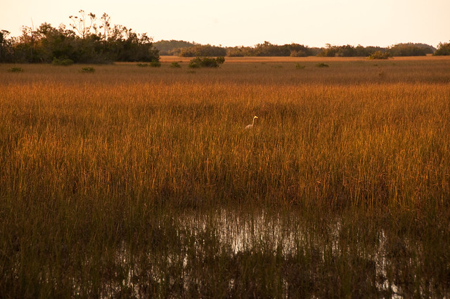Header of River Of Grass