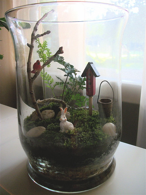 mini glass garden rabbit 39 s foot fern with moss and. Black Bedroom Furniture Sets. Home Design Ideas