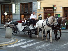 cart(0.0), vehicle(1.0), mode of transport(1.0), pack animal(1.0), coachman(1.0), horse(1.0), horse harness(1.0), horse and buggy(1.0), land vehicle(1.0), carriage(1.0),
