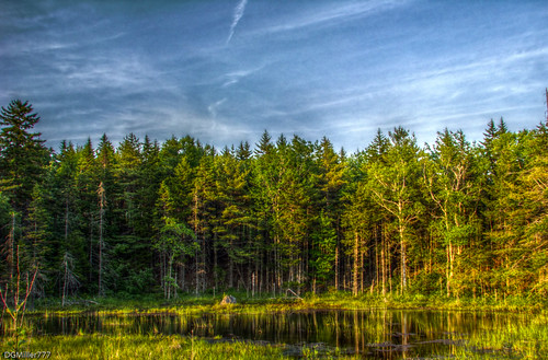 trees canada reflection water pond highway raw novascotia ns mount 101 hdr uniacke dng qtpfsgui chdk