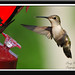 Humming Bird by craigwortman