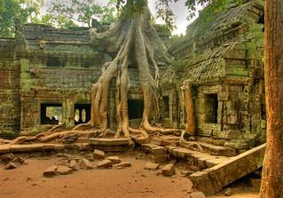 Ta Prom Ruins Cambodia