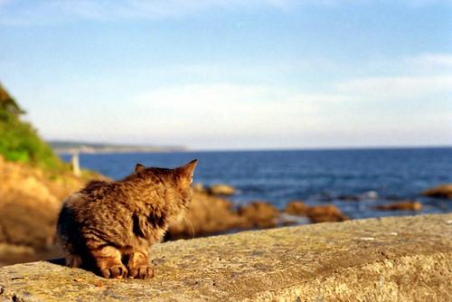 cat island cat