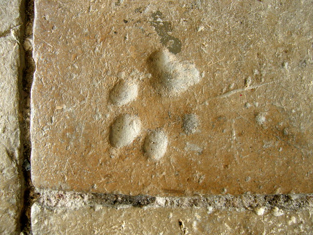 definede köpek işareti