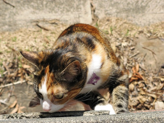 Older Cat Smells Like Poop