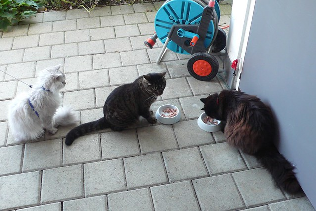 3 cats and a tuna fish supper