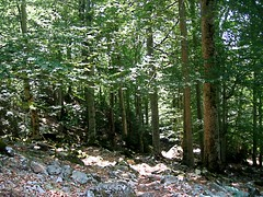Hêtraie de la haute vallée du Cruzini