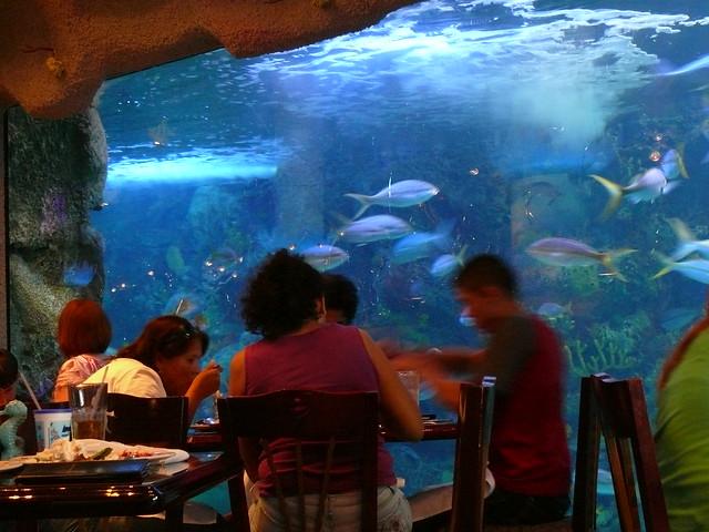 Denver Aquarium Restaurant Reviews