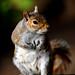 Squirrel by graspnext
