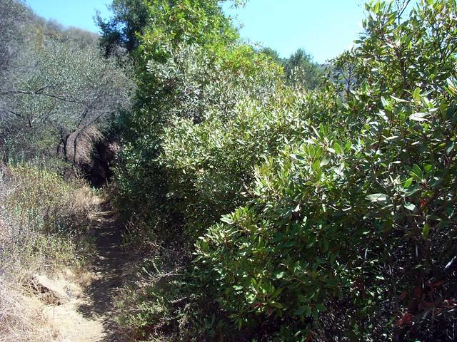 Solstice Cyn Trails 040