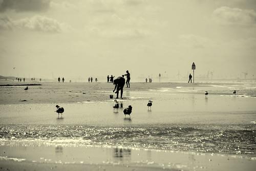 beach nikon windmills explore northsea 18 frontpage soe d80 utatafeature shieldofexcellence industrialskyline windsandandwater scenicsnotjustlandscapes driftingwiththetide hndrk