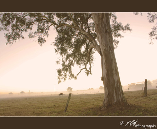 morning winter horse mist cold tree june fog digital rural sunrise canon fence gum eos rebel haze post reserve property australia qld queensland outback eucalyptus logan xsi paddock 450d