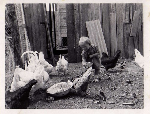 Eglė Zizis feeds the hens, Sale 1954.