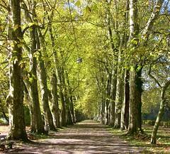 Garten,Parks,Flora,Natur