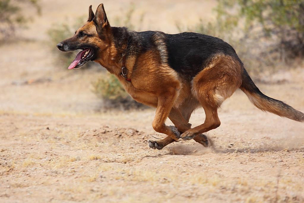 Собака картинка