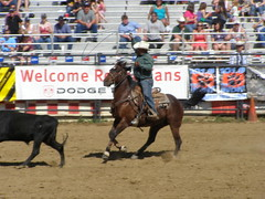 animal sports, rodeo, western riding, chilean rodeo, event, equestrian sport, sports, charreada,