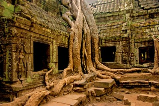 Ta Phrom, Cambodia! Cr@zY