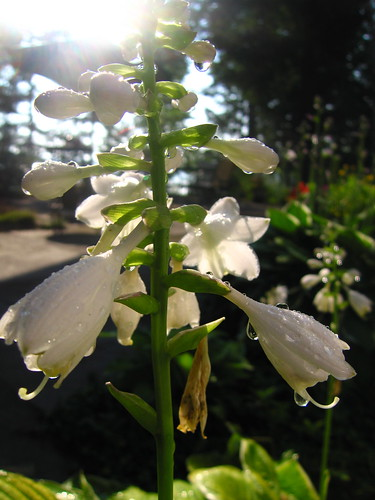sunrise dew flowers nature newhampshire