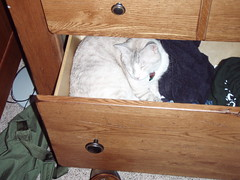 Diego in a drawer