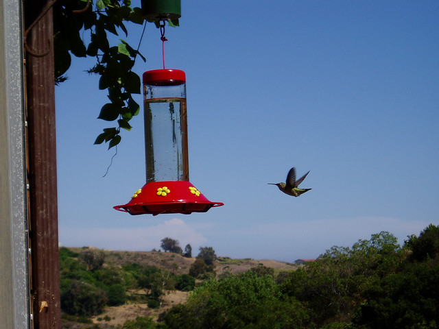 hummingbird in the cove