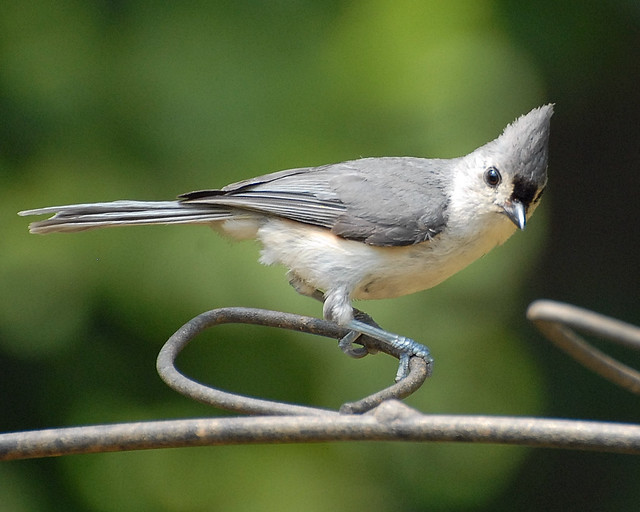 backyard birds that visit feeder in williamsburg virginia