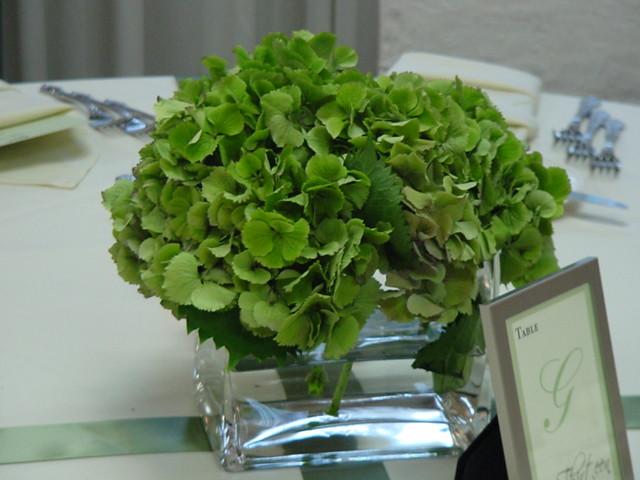 Green Hydrangea Centerpiece : Green hydrangea centerpiece flickr photo sharing