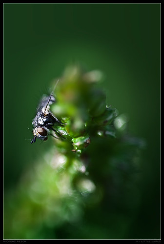 fab macro grass fly blade