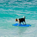 Kailua Dog