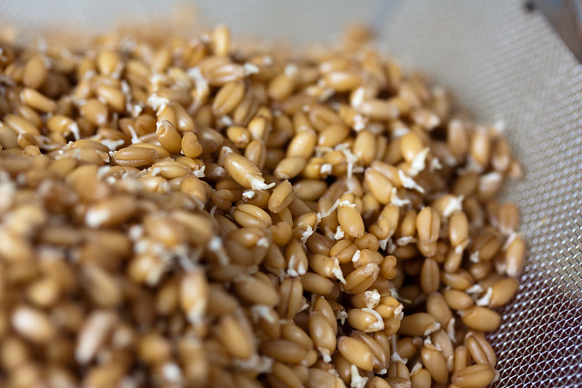 Nature S Own  Sprouted Grains Ingredients