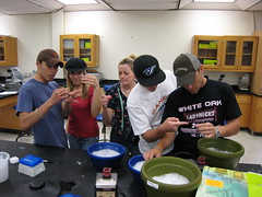 Cell and Molecular Biology Lab 2008 2