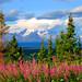 Elegant Alaska by Walt K