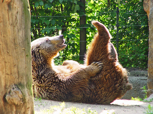 Bear in a funny position
