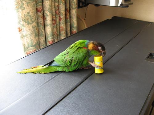 Brinquedos para distração de pássaros domésticos