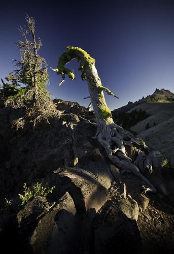 tree fantasy craterlake shannarra sunsetoregonportlandcraterlakettkhikerspacnw